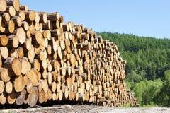 Gehakte houten die logboeken in de bos van de de energiezomer van de bossen vernieuwbare groene biomassa de zonloch blauwe hemel  Stock Fotografie