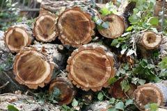 Gehakte houten logboeken Royalty-vrije Stock Foto