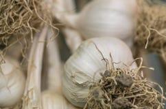 Gehangen garlics Royalty-vrije Stock Foto