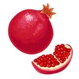 Geheel en het fruit van de plakgranaat met zaad Vector vlakke illustratie Stock Afbeelding