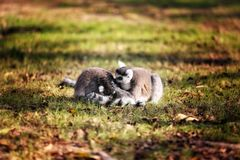 Geheime Interaktion der Zootiere bunt lizenzfreie stockbilder