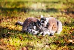 Geheime Interaktion der Zootiere bunt stockbild