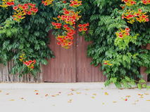 Geheime Tür Stockfotografie