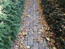 Geheime weg aan de tuin van stenen en bladeren stock foto