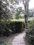 Geheime weg in de tuin royalty-vrije stock foto's