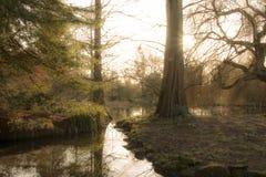 Geheimer Wald Stockbilder