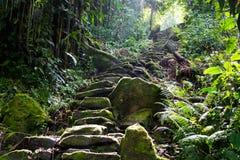 Geheimer Weg in der verlorenen Stadt, Gestalt für den Tayrona-Stamm in Kolumbien stockfoto