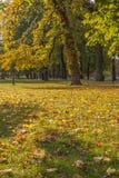 Geheimnis Autumn In The Park Lizenzfreies Stockfoto