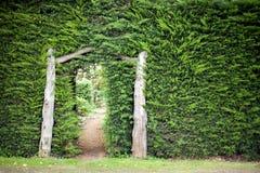 Geheimnis-Garten stockfotos