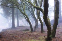 Geheimnis-Wald Stockbilder