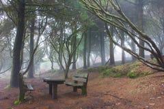 Geheimnis-Wald Stockbild