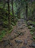 GeheimnisBäume des Waldes Stockfotografie