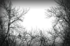Geheimnisbaum silhoutte Lizenzfreie Stockfotos