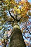 Geheimnisvoller Baum Stockbild