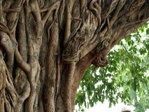 Geheimnisvoller Baum Lizenzfreies Stockbild