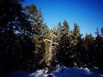 Geheimnisvoller Baum Stockfotografie