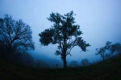 Geheimnisvoller Baum lizenzfreie stockfotos
