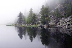 Geheimnisvoller, nebeliger See mit Kiefern Lizenzfreies Stockfoto