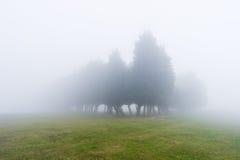 Geheimnisvoller nebeliger Wald Stockfoto