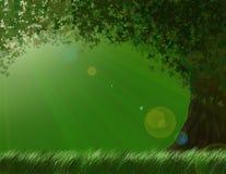 Geheimnisvoller sonniger Baum Lizenzfreies Stockfoto