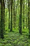 Geheimnisvoller Wald Stockfotos