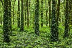 Geheimnisvoller Wald Lizenzfreie Stockbilder