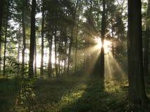 Geheimnisvoller Wald Stockbild