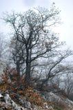 Geheimnisvoller Wald Stockfoto