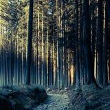 Geheimnisvoller Wald Lizenzfreies Stockbild