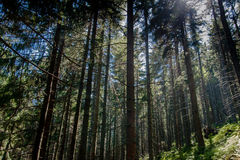 Geheimnisvoller Wald Lizenzfreie Stockfotos