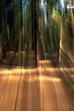Geheimzinnig bos Stock Afbeeldingen