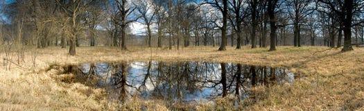 Geheimzinnig bos bij een vijver stock fotografie