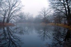 Geheimzinnig bos bij mistig royalty-vrije stock afbeeldingen