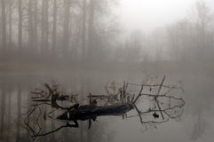 Geheimzinnig bos bij mistige ochtend royalty-vrije stock foto