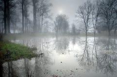 Geheimzinnig bos bij mistige ochtend Royalty-vrije Stock Afbeeldingen