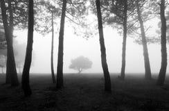Geheimzinnig bos in zwart-wit Stock Afbeeldingen