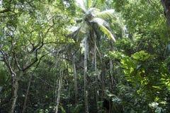 Geheimzinnig, donker wildernisbos in Barbados royalty-vrije stock foto