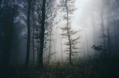 Geheimzinnige atmosfeer in het achtervolgde hout met mist royalty-vrije stock fotografie