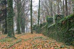 Geheimzinnige begraafplaats van dwazen met bomen stock afbeelding