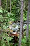 Geheimzinnige bergrivier in het midden van het bos Royalty-vrije Stock Foto