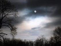 Geheimzinnige bosnacht in het bos Stock Afbeelding