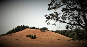 Geheimzinnige bossen, Oregon; roseburg royalty-vrije stock fotografie