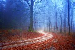 Geheimzinnige bosweg Royalty-vrije Stock Afbeelding