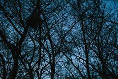Geheimzinnige donkere bos, bomen en takkenachtergrond stock afbeeldingen