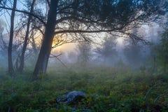 Geheimzinnige ochtendtijd op moerasgebied Stock Afbeelding