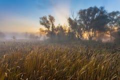Geheimzinnige ochtendtijd op moerasgebied Royalty-vrije Stock Foto