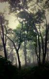 Geheimzinnige teakbomen door mist in het Himalayagebergte royalty-vrije stock foto's
