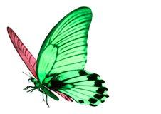 Geheimzinnige vlinder Stock Fotografie