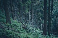 Geheimzinnige wandelingssleep in de bergen stock foto