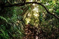 Geheimzinnige weg in het bos Royalty-vrije Stock Fotografie
